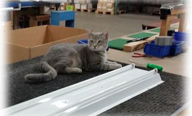 Cat Mgr